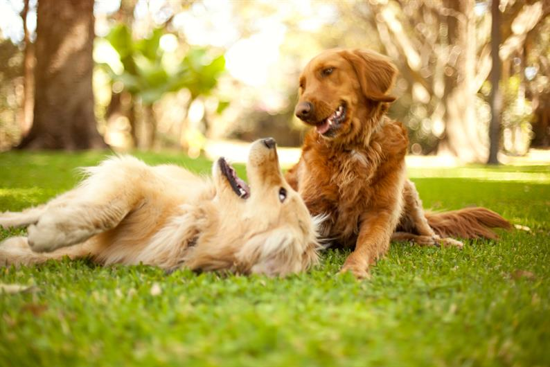 You and your dogs can enjoy the August Brook community dog park