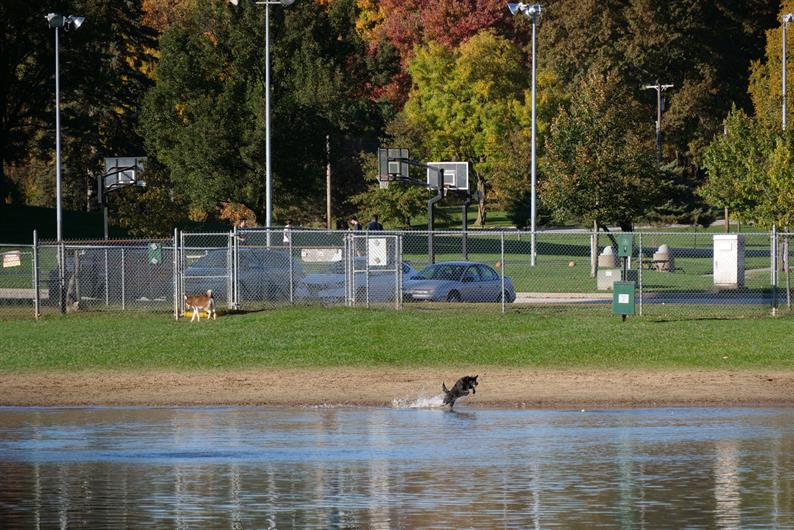 BOW WOW BEACH DOG PARK AND SILVER SPRINGS PARK ARE AROUND THE CORNER FOR OUTDOOR FUN