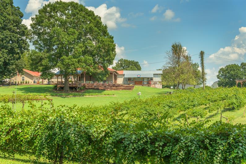 Visit Treehouse Vineyards Just 3 Miles Away