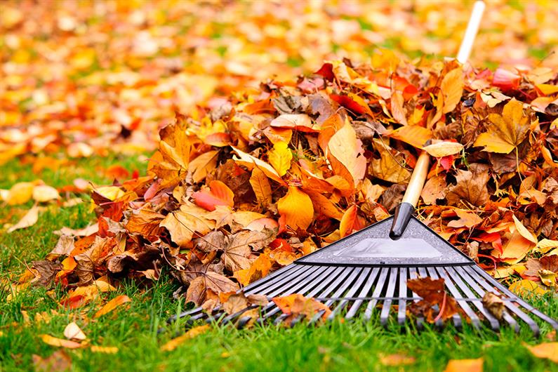 Tired of Raking Leaves? Dread turning on the heat to see if it will work this season?