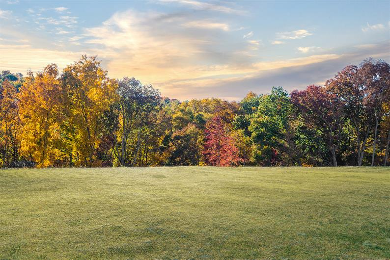 Beautiful wooded backyards at Imperial Ridge