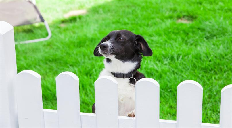 FENCES AND SHEDS PERMITTED - YOUR PUP WILL LOVE LIVING HERE
