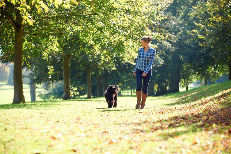Dog Park, Hiking Trails, and more
