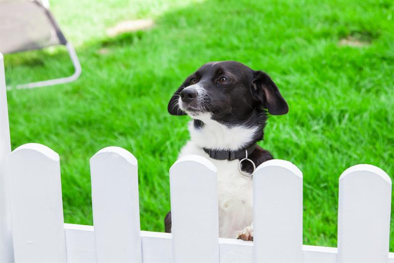 FENCES AND SHEDS ARE PERMITTED TO PERSONALIZE YOUR YARD OR HEAD TO THE COMMUNITY DOG PARK