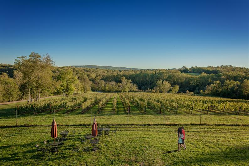 LOUDOUN COUNTY IS WINE COUNTRY!