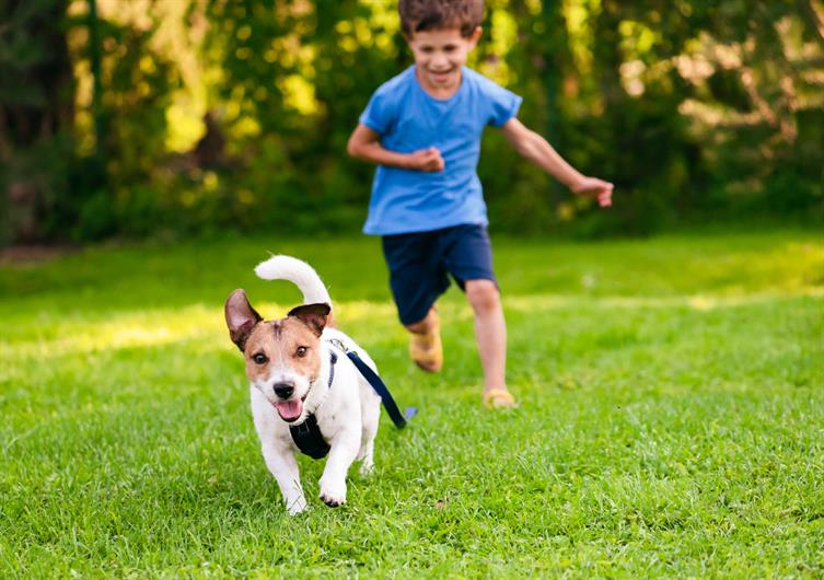 DOG PARK, TOT LOT, OPEN SPACE, & MORE