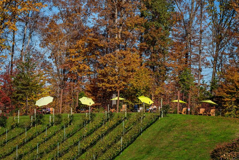 HAVE FUN CATCHING UP WITH FRIENDS IN THE GENEVA AND MADISON WINE COUNTRY