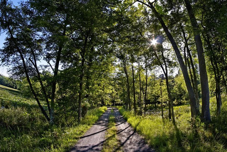 Take a serene stroll