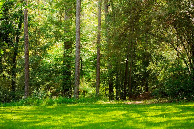 Large wooded homesites