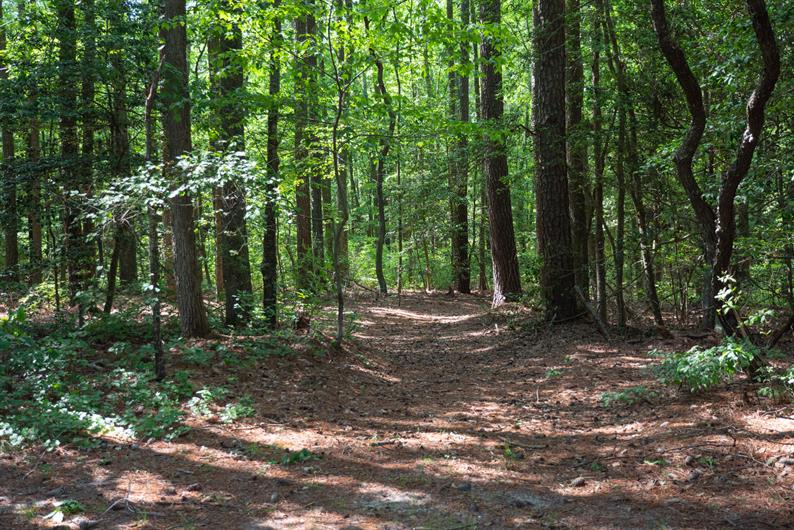 Enjoy Trails, Picnics, and More at Reedy Creek Park